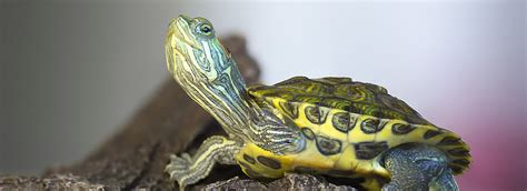 Reptile Heat Ls Petsmart by Reptile Care Keeping Pet Lizards Snakes Frogs Petsmart
