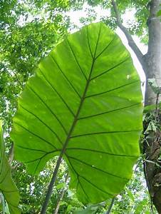 17 Best images about Rainforest Plants on Pinterest ...