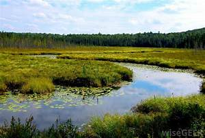 What Are The Different Types Of Wetland Climates