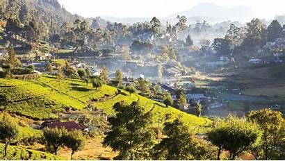 Coffee Indonesia Indonesian Sumatra