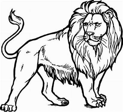 Lion Coloring Realistic Leeuw Kleurplaat Printable Clipart