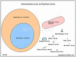Related Keywords & Suggestions for spirillum diagram