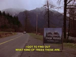 douglas fir tree | Tumblr