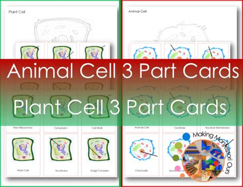 montessori animal plant cell  part cards  colouring