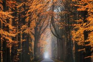 Seasons, Road, Trees, Wallpapers, Hd, Desktop, And, Mobile, Backgrounds