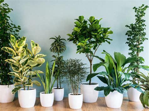 jenis tanaman hias indoor membuat suhu ruangan