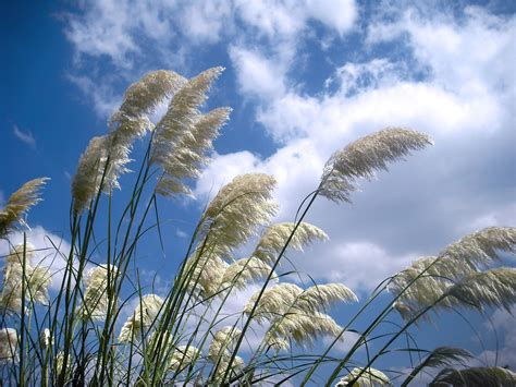 Grasses in windy day free image