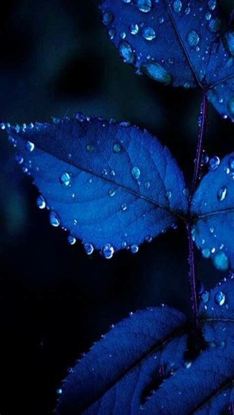 pin  lindsey nicole  phonewallpapers blue leaves