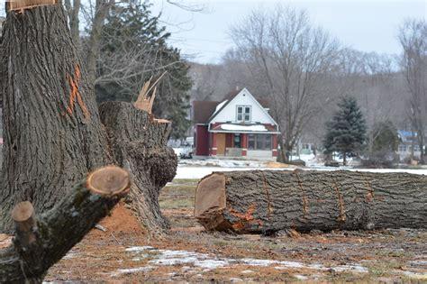 cedar rapids removes  healthy trees  czech village