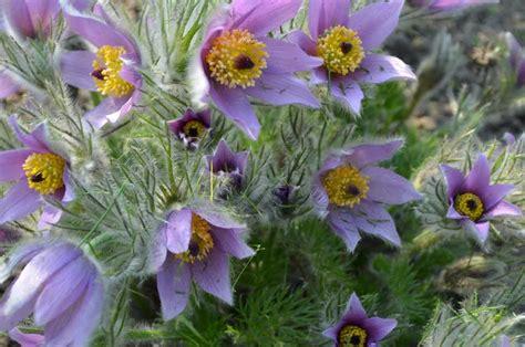 PAVASARIS | Plants, Garden