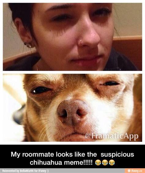 Memes De Chihuahua - suspicious chihuahua memes image memes at relatably com