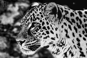 Schwarz Weiß Bilder Tiere : fotografie herzblut farben sehen rot ~ Markanthonyermac.com Haus und Dekorationen