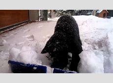 Lustige schwarze Katze spielen im Schnee YouTube