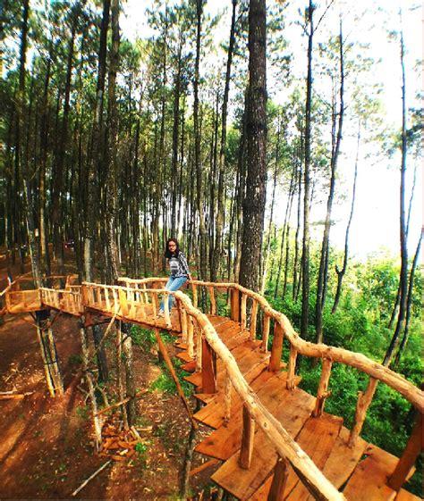 lokasi  rute menuju hutan pinus pengger jogja serunya