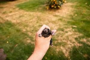 Comment Attraper Une Taupe : cohabiter avec les taupes au jardin groww ~ Dailycaller-alerts.com Idées de Décoration