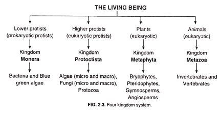 kingdom system  organisms classification top  concepts