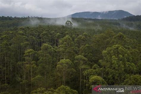 Nah, ada puluhan tempat wisata alam seru di lampung dan sekitarnya. Kalimantan Selatan contoh pengelolaan fungsi hutan Jatim - ANTARA | Contoh Contoh Blog