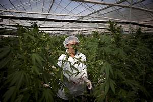 Marijuana Legalization Essays Norway May Decriminalize Heroin Inhalation Allow Smoking