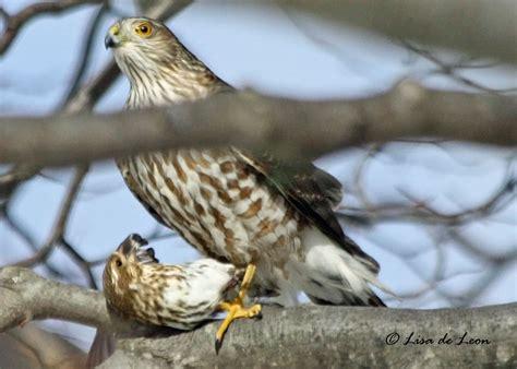 Birding With Lisa De Leon