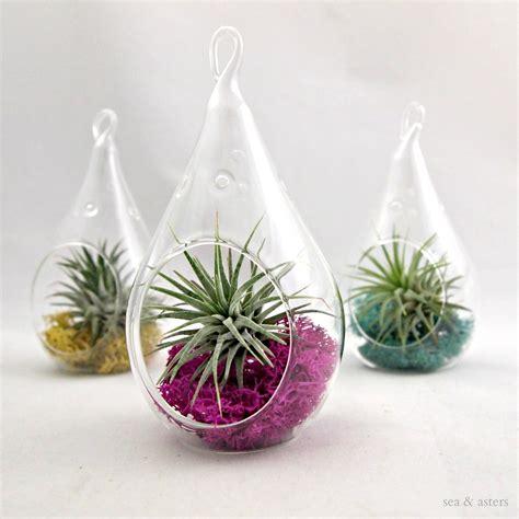 small terrarium plants small droplet air plant terrarium choose your by seaandasters