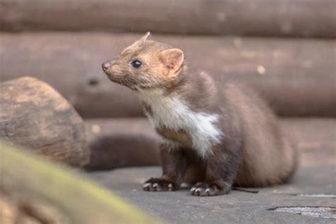mäuse im haus was tun wilde tiere im garten was tun gegen fuchs marder
