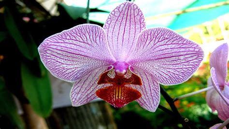 one orchid orchid flower image hd wallpaper stock photos free download