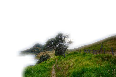 pemandangan rush rumput gambar gratis  pixabay