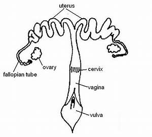 13 14  Reproductive System Worksheet Answers