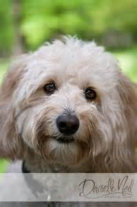 Fluffy Dog with Face