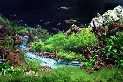aquascape plants list 17 best images about freshwater on haunted