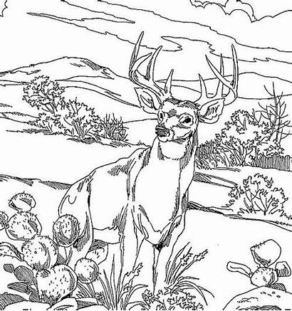 Deer Coloring Pages Realistic Hunting Adults Printable