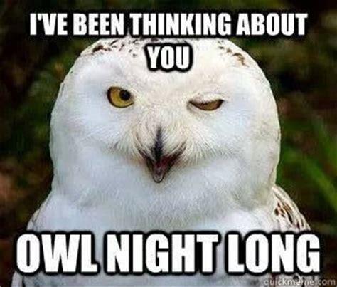 White Owl Meme - owl pick up lines animal love pinterest night owl and pick up line