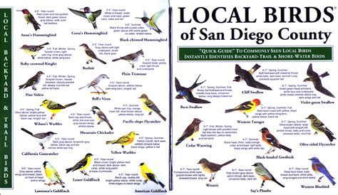 san diego county local birds