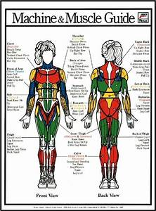 16 Best Images About Anatomy On Pinterest