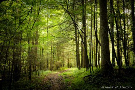 appalachian treks soothing nature