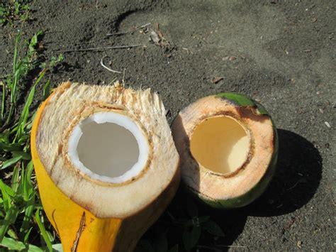 nuts  coconuts  amazing ways  consuming