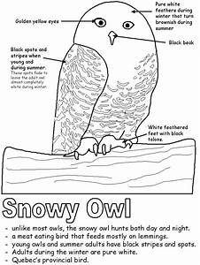 Snowy Owl With Labels