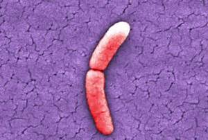 Bacterial Reproduction And Binary Fission