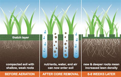 benefits of lawn aeration show your lawn some love the importance of aeration before fertilization st george news