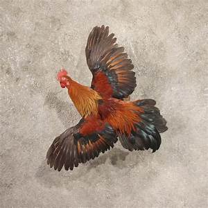 Flying Male Rooster Life Size Taxidermy Bird Mount For Sale