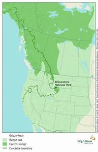 Grizzly Bear  Current And Historic Range Map