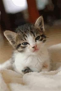 Cute Animal Gifs, cute kitten gif appreciaton post =D