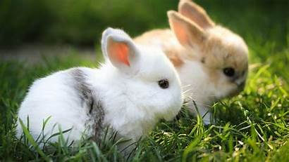 Rabbit Wallpapers Desktop Rabbits Bunny Bunnies Adorable