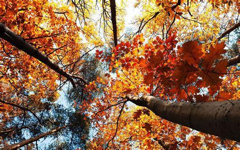 Autumn Windows Xp Wallpapers by Windows Xp Fall Wallpaper Wallpapersafari