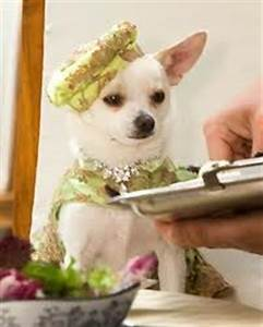 Chloe | Beverly Hills Chihuahua Wiki | FANDOM powered by Wikia