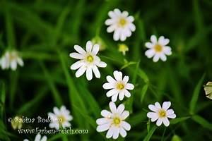 Blumen Im Frühling : bl ten und blumen im fr hling ~ Orissabook.com Haus und Dekorationen