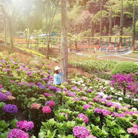 Berada di ketinggian pegunungan dan tidak jauh dari gunung gede membuat suasana dan udara disini segar sekali. Wisata Pandeglang Taman Bunga : Taman Bunga Nusantara, Menikmati Ekosistem Ribuan Bunga ...