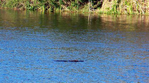 water gator profile gators kayak fishing sometimes eyes