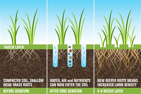 grass seed lawn repair why aeration and overseeding are needed in the fall