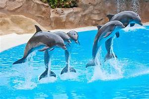 Espectaculo de Delfines, en el Zoo de Madrid España Dolphin show at the Zoo YouTube